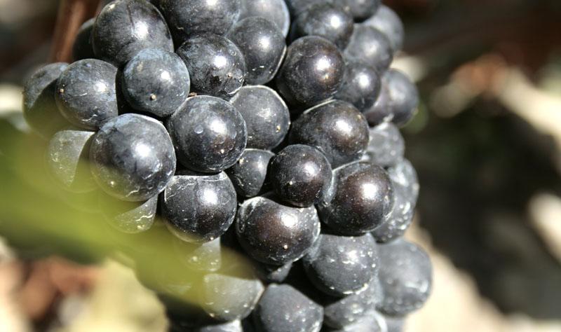 grapessmall